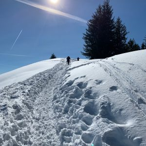 Snow Shoeing track